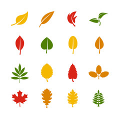 Wall Mural - Leaf vector color icons