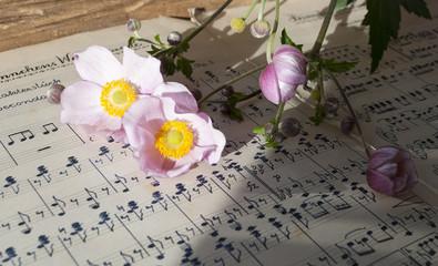 Altes handgeschriebenes Notenblatt mit rosa Herbstanemone (Anemone hupehensis), Hintergrund