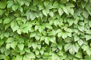 green foliage