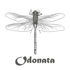 illustration vector hand draw doodles of black dragonfly isolated on white background