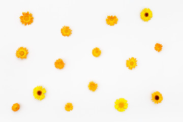 Composition flowers on white background. Top view, flat lay pattern