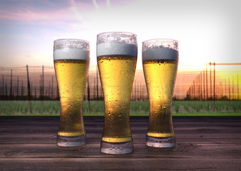 three glasses of beer with hop-garden background - 3D render