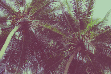 Wall Mural - Coconut palm trees at tropical beach vintage filter