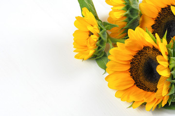 Bunch of sunflowers laid on white isolated background