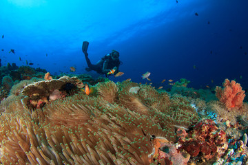 Scuba dive coral reef ocean
