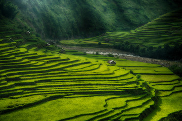 Wall Murals Rice fields Rice fields on terraced