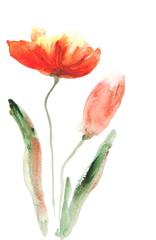 Acrylic color painting of orange tulip flowers on white