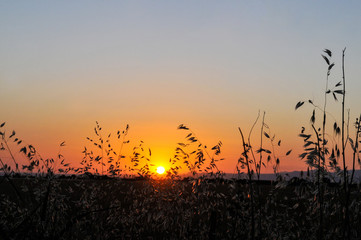 Big Sun, Sunset And Gramineae Silhouette Rim Light