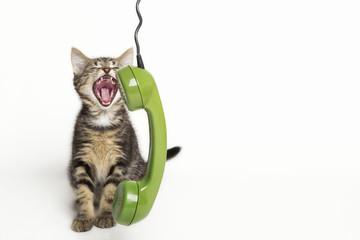Katze im Gespräch am Telefon