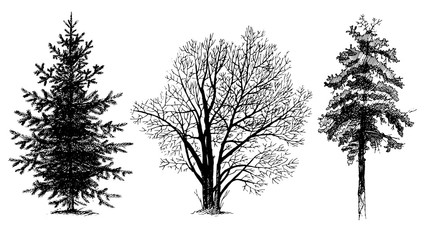 Set of tree silhouettes. Shading painting. Vector