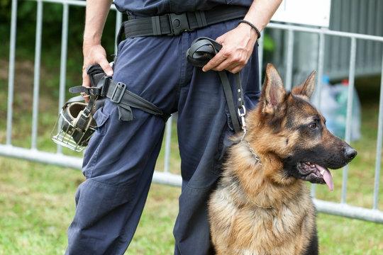 Policeman with a German shepherd on duty. Police dog.