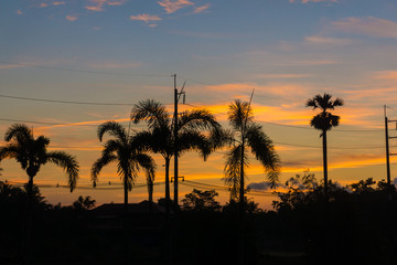 Palm trees silhouette at sunrise on tropical forest