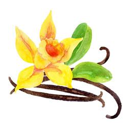 Vanilla flower and pods
