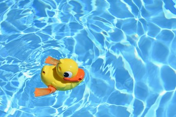 Background for summer holiday, traveling and vacation. Yellow rubber duck in the home pool.