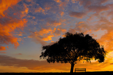 Lonely Tree Silhouette against the sunset sky
