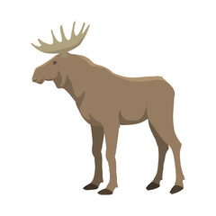 Elk vector illustration. Wild nature. Forest animal with horns. Flat isolated illustration on white background