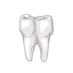 Illustration of tooth. Dental, medicine, health concept.
