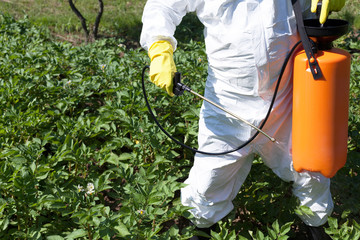 Man spraying toxic pesticides or insecticides in vegetable garden