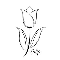Vector black contour of a tulip flower isolated on a white backg