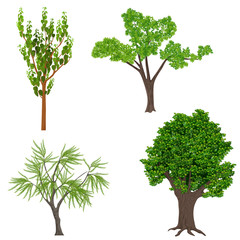 Highly detailed realistic cartoon trees set. Wood forest icons elements.