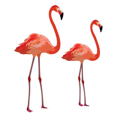 Flamingo birds Vector isolated on white