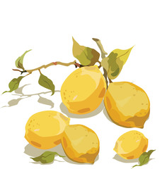 Fresh lemon branch with leaves isolated Vector