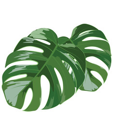 Palm tree leaves isolated Vector. Exotic background