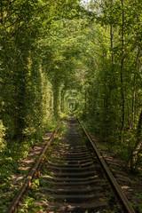 love tunnel in summer