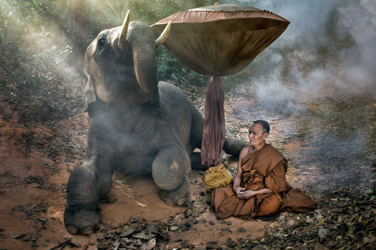 The old monk with a young elephant in the forest.
