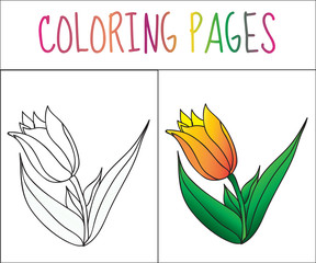 Coloring book page, flower, tulip. Sketch and color version. Coloring for kids. Vector illustration