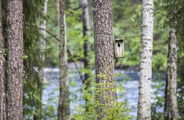 Birds nest in Finish Lapland