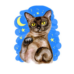 Watercolor close up portrait of popular shorthair Burmese cat breed isolated on moon an stars background. Rare chocolate colouration. Hand drawn home pet. Greeting birthday card design. Clip art