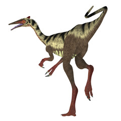 Pelecanimimus Dinosaur Tail - Pelecanimimus was a carnivorous theropod dinosaur that lived in the Cretaceous Period of Spain.