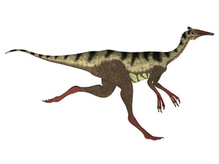 Pelecanimimus Side Profile - Pelecanimimus was a carnivorous theropod dinosaur that lived in the Cretaceous Period of Spain.