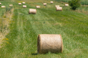 Landscape photo of rolled hay on a field