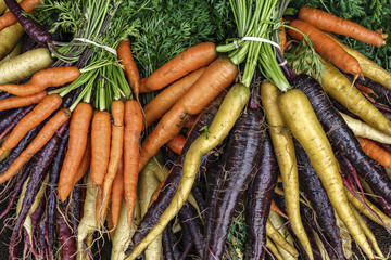 Colorful organic carrots at an outdoor farmers market in Seattle.