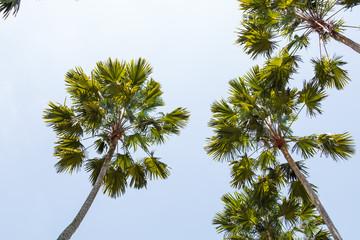Palm tree-4
