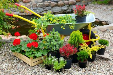 Seedlings of flowers and trees plants