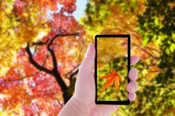 スマートフォンと秋