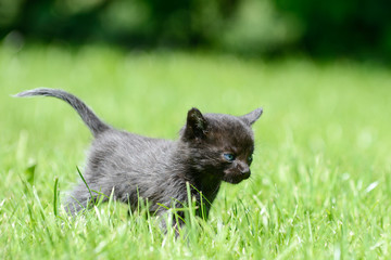black cat standing on the meadow