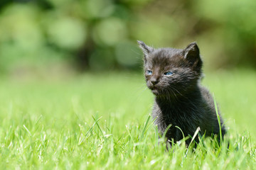 black kitten sitting on meadow