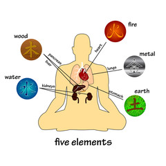 Five elements and human organs. Silhouette of sitting man