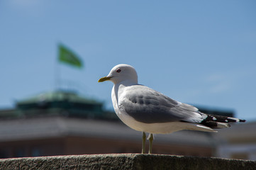 seagull on a background of green flag