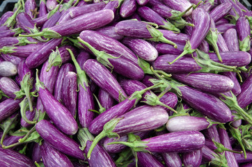 Mounds of Sicilian style eggplants ready for market