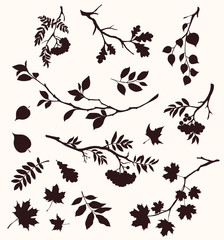 Autumn set of twig and leaf silhouttes. Decorative tree branches. Oak, maple, rowan, and birch