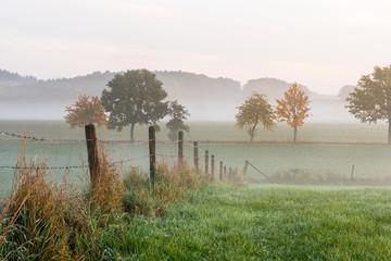 Fotoväggar - Zaun und Bäume im herbstlichen Morgennebel