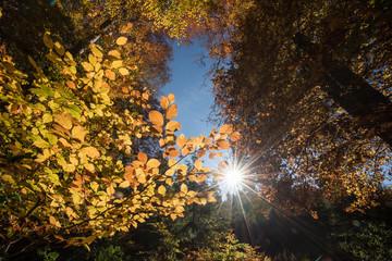 Fotoväggar - die Sonne scheint durch ein Fenster im Herbstwald