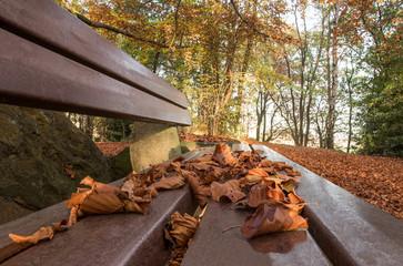 Fotoväggar - Herbstblätter auf einer Parkbank
