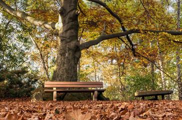 Fotoväggar - Parkbank im Wals mit herbstlichem Laub im Vordergrund