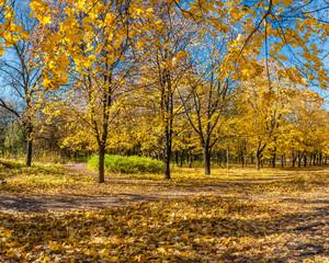 Beautiful autumn parkland